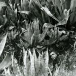 Giacinto Cerone tra le agavi, S. Arcangelo (PZ), 2004. Foto D. Brancale